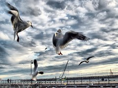 Dancing in the air (violetaS_gr PRO(www.euphoriaphotography.com.au)) Tags: bridge sky people sun seagulls clouds port australia melbourne victoria pia soe wow1 wow2 seea platinumheartaward flickraward doubleniceshot tripleniceshot flickraward5 flickrawardgallery ringexcellence dblringexcellence tplringexcellence violetasgr wwweuphoriaphotographycomau eltringexcellence