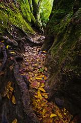 (Iggzbeealidoshus) Tags: autumn orange green nature leaves yellow digital moss long exposure path tripod tildenpark tamron1750 naturearea pentaxk5