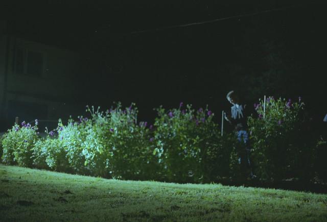 trawnikehe