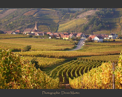 autumn (denismartin) Tags: autumn fall yellow jaune alsace denismartin niedermorchwier