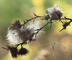 Colori e sfumature (Gianni Armano) Tags: natura piemonte colori alessandria ottobre 2011 ragnatela sfumature sangiulianonuovo