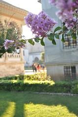 topkapi palace (Cemal karademir) Tags: old flower tree green art turkey wonderful garden photo nikon purple image turkiye violet istanbul palace historical sultan ottoman topkapi naturel cemal karademir d5000 cemalkarademir