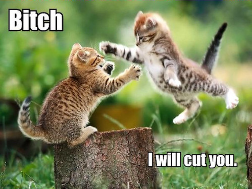 bitch_i_will_cut_you_trollcat