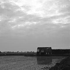 Cloudy evening_1 (zack-tk) Tags: sky bw mediumformat square landscape hokkaido structure hasselblad 500cm classicblackwhite totalphoto xp2superxp2s carlzeisstplanarcf80mmf28