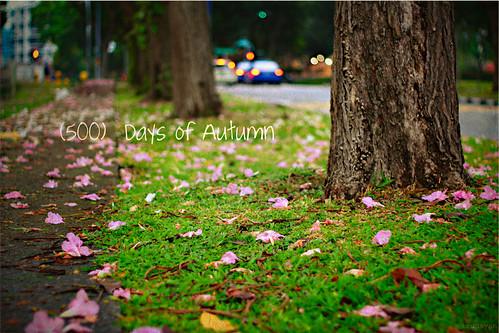 500 Days of Autumn