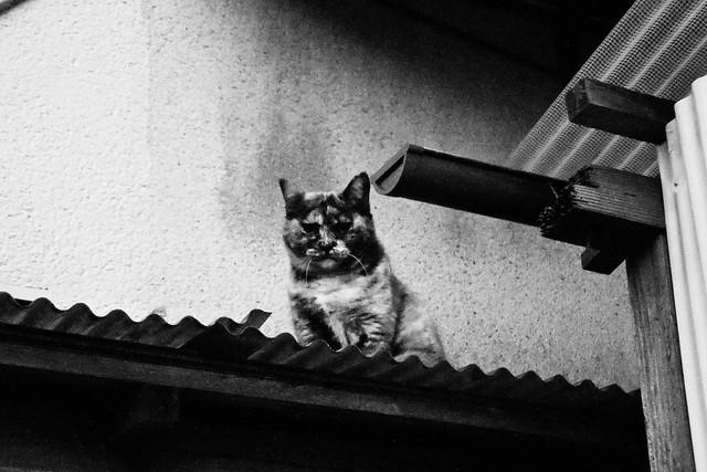 Today's Cat@2011-10-18