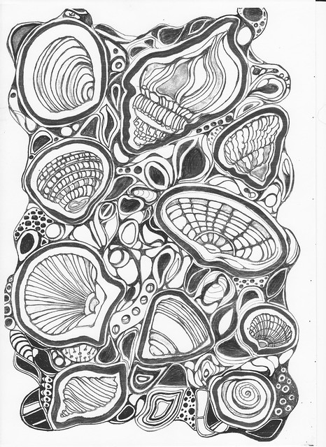 Shells by Jane Matthews