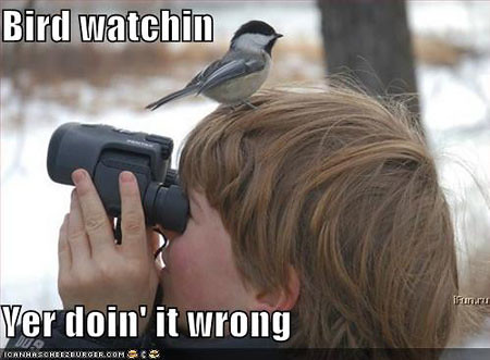 lol-bird-watch