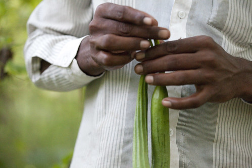 mandi_farmer_zucchini_4