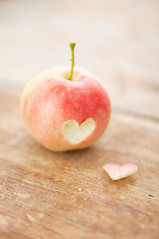 A little bit of apple love (Karin A ~) Tags: autumn red apple alice homegrown alittlebitofapplelove yesitsthenameoftheapple