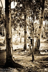 Hope I had a playmate.. (Reyne Villena) Tags: trees boy playground play cebu bohol playmate cebusugbo teampilipinas photokalye