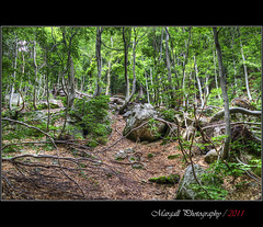 In the wood,waiting the autumn - HDR (Margall photography) Tags: wood autumn mountain tree photography dante piemonte marco livio cuneo montagna bianco hdr undergrowth galletto margall