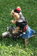 One gust of wind..and I've had it.... (karlaspence35) Tags: dog hat bike glasses kilt flames harley bagpipes rubin