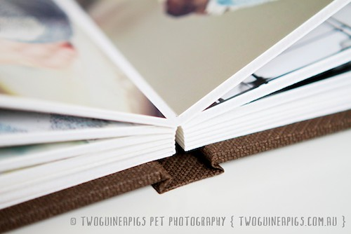 Little Tomes for Pets by by twoguineapigs pet photography
