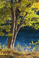 """Vermont Lazy Afternoon • <a style=""""font-size:0.8em;"""" href=""""http://www.flickr.com/photos/55747300@N00/6175425506/"""" target=""""_blank"""">View on Flickr</a>"""