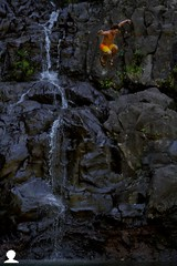 Rico Ninjasteeze (Aaron Lynton) Tags: hawaii waterfall maui hike hana bambooboogie