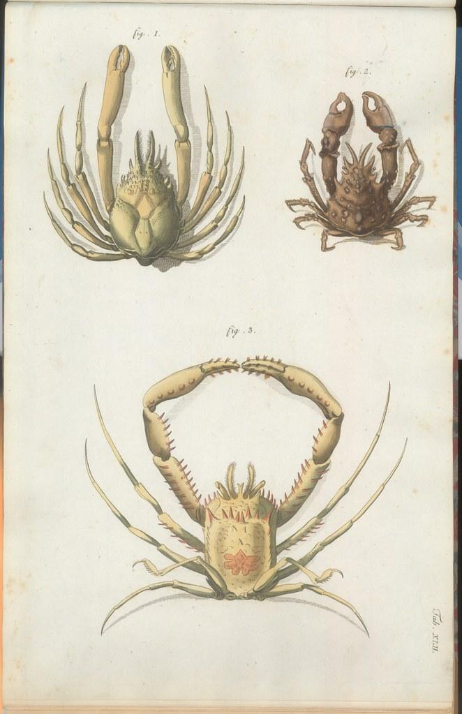 Versuch einer Naturgeschichte der Krabben und Krebse k