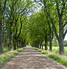 alle (mlnilsson) Tags: tree castle arbol sweden olympus avenue castillo suecia alle slott vrams gunnarstorps