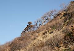 Coastal Bluff Stabilized by Vegetation (sandy richard) Tags: geology wildwood wildwoodstatepark newyorkstateparks longislandbeaches sandyrichard longislandgeology sandrarichard wildwoodstateparkgeology