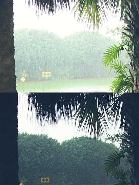 rainy diptych