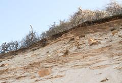 Glacial Outwash in Coastal Bluff (sandy richard) Tags: geology wildwood wildwoodstatepark newyorkstateparks longislandbeaches sandyrichard longislandgeology sandrarichard wildwoodstateparkgeology