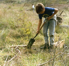 Planting by kids at Sherwood Forest (spelio) Tags: old forestry digging g australia historic collection pines plantation operations canberra forests act planting stakes regeneration silviculture greening
