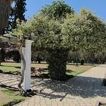 "Parque San Martín <a style=""margin-left:10px; font-size:0.8em;"" href=""http://www.flickr.com/photos/14315427@N00/6190039300/"" target=""_blank"">@flickr</a>"