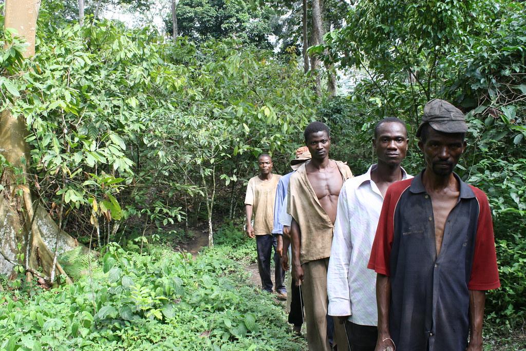 Visite de parcelle de cacao en groupe Togo