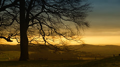 Escarpment (Andrew Lockie) Tags: winter sunset landscape view widescreen broadway cotswolds valley vista lonetree escarpment cotswold 16x9 snowshill