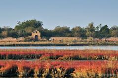 Ossario di Sant'Ariano (Selina Zampedri) Tags: venice laguna acqua venezia monastero veneto storia barena salicornia ossario lagunanord lagunadivenezia santariano