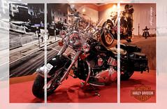 Real Machine ;) (Abhinav Singhai) Tags: india david bike photography steel parts delhi magic machine stall chrome harleydavidson motorcycle terminator nikkor 50 heavy superbike superduper nikon50mm nikond90
