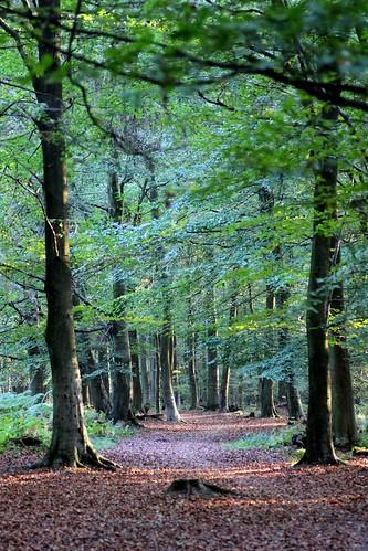 The Kings Wood
