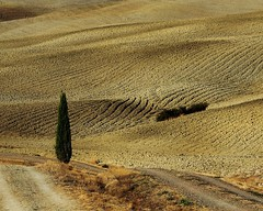 Between the roads (da.geli) Tags: italy tree landscape tuscany naturepoetry absolutegoldenmasterpiece doubleniceshot tripleniceshot mygearandme mygearandmepremium mygearandmebronze mygearandmesilver mygearandmegold ruby10 ruby5 musictomyeyeslevel1