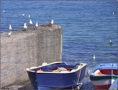 Dolce oziare (danilo.arigo) Tags: mare blu barche riposo sole gabbiani ozio