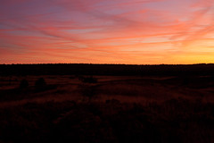 _MG_2425.jpg (Ferry Streng) Tags: sunlight arnhem gelderland rozendaal rozendaalseveld moliniacaerulea otherkeywords pijpenstrootje