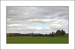 Troupeau de vaches ! (yvescourt123) Tags: the4elements