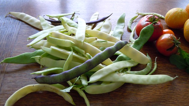 My new favorite vegetable: garden grown fresh beans
