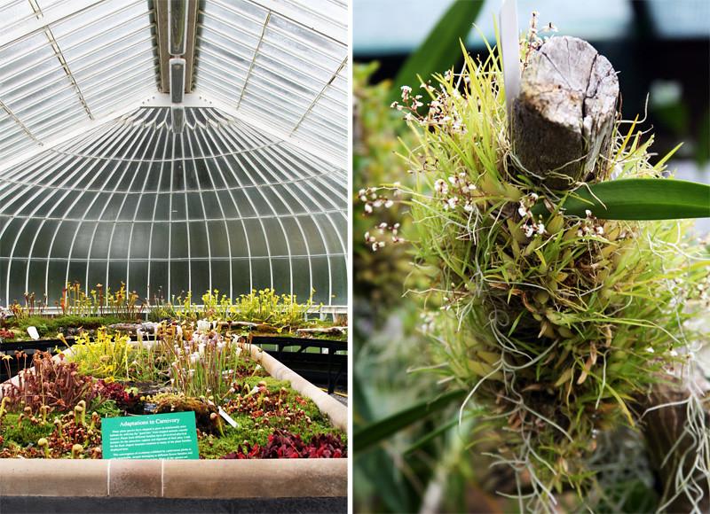 Botanic Gardens2