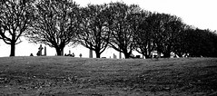 Life and Death (gajtalbot) Tags: trees blackandwhite bw tree cemetery scotland glasgownecropolis