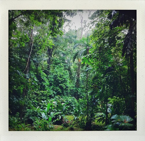 Costa Rica 2011: View From Our Tree House by Sanctuary-Studio