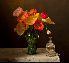Still Life - Envy (kevsyd) Tags: stilllife poppies 645d kevinbest