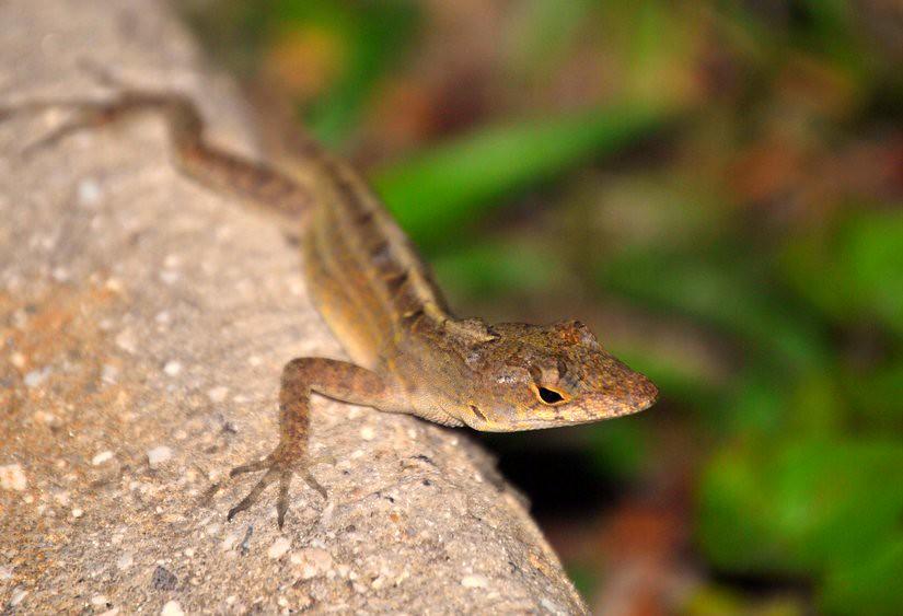 15/365 - Lizard