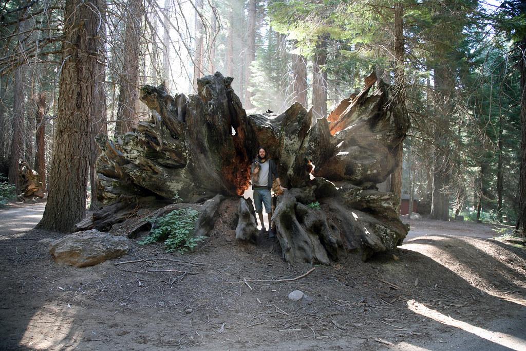 Justin in Tree