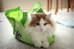 The Cat's [Not] Outta the Bag