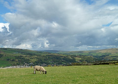 Eventful Sky and Oblivious Sheep by Tim Green aka atoach
