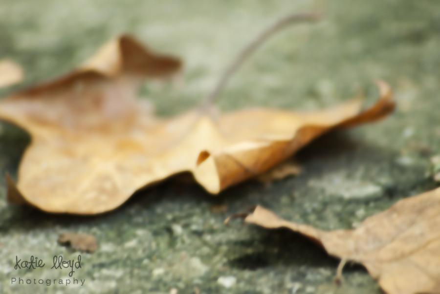 Curl-Leaf-OOF