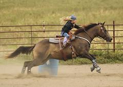 Barrel Racing (Al Braunworth) Tags: horses speed spurs boots barrels riding blonde rodeo brunette horseshow cowgirls barrelracing