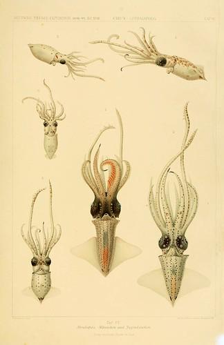 014-Die Cephalopoden 1910- Carl Chun