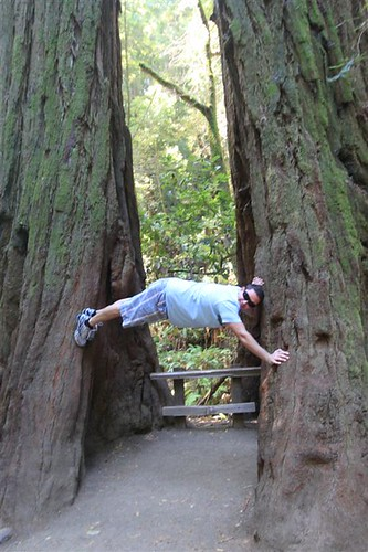 He tried to do some 'acrobatics' between redwood trees at Muir Woods, San Francisco
