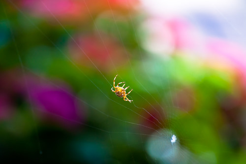 Spider among the Color Bokeh